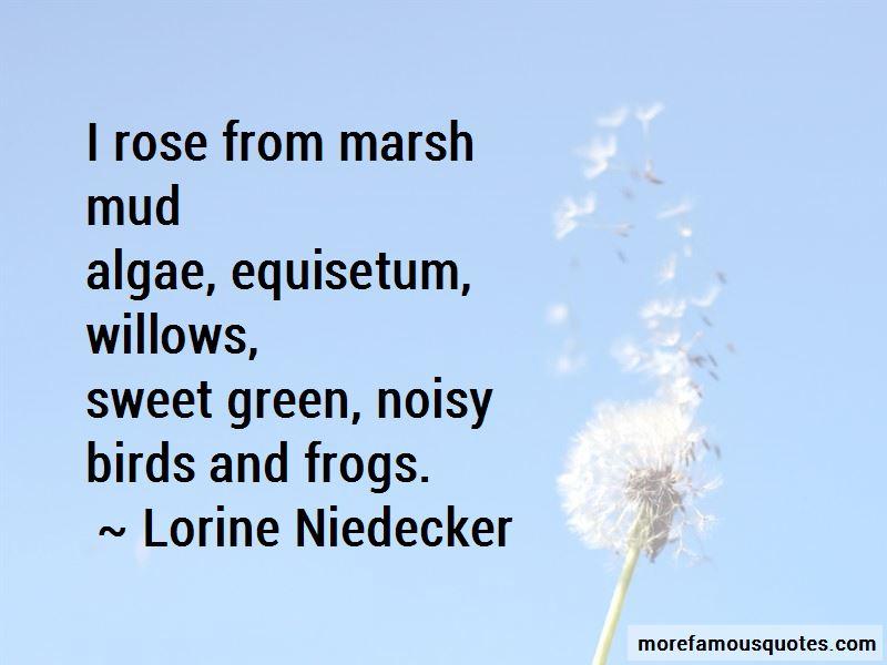 Lorine Niedecker Quotes Pictures 2