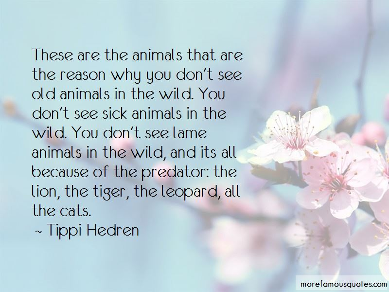 Tippi Hedren Quotes Pictures 2