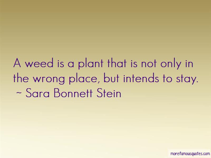 Sara Bonnett Stein Quotes