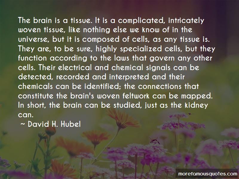 David H. Hubel Quotes Pictures 3