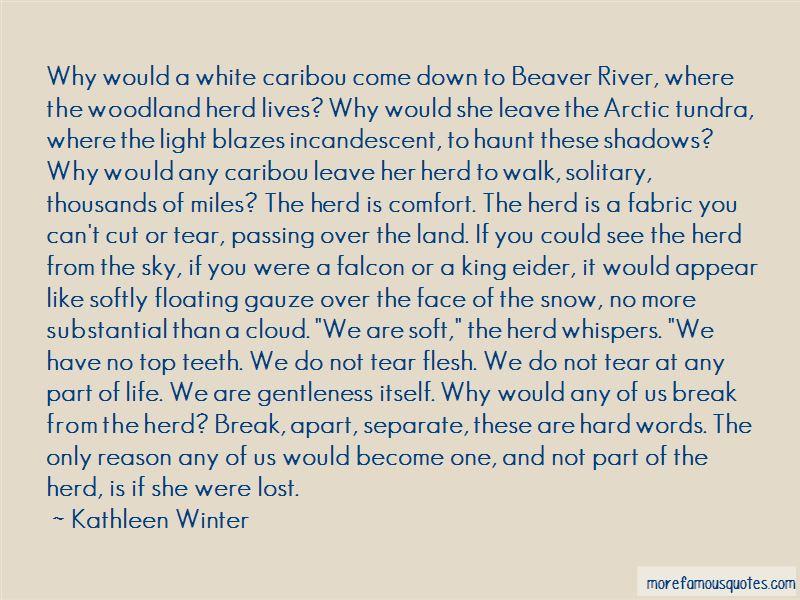 Kathleen Winter Quotes