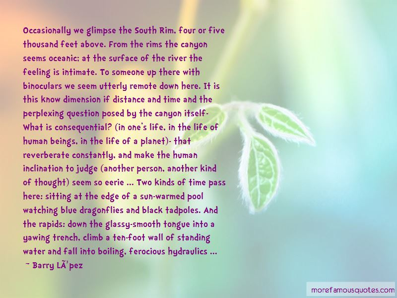 Quotes About Dragonflies And Life