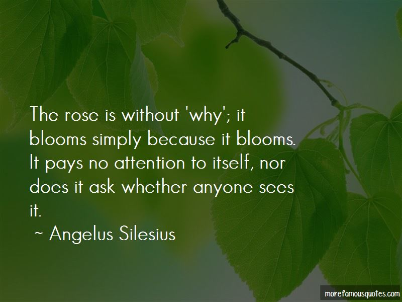 Quotes About A Rose That Blooms