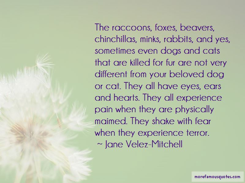 Quotes About Chinchillas