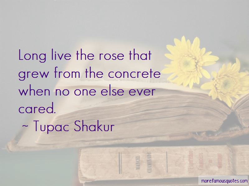 Quotes About The Rose That Grew From The Concrete