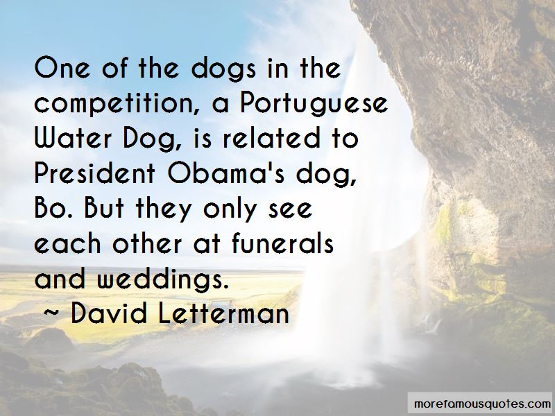 Water Dog Quotes