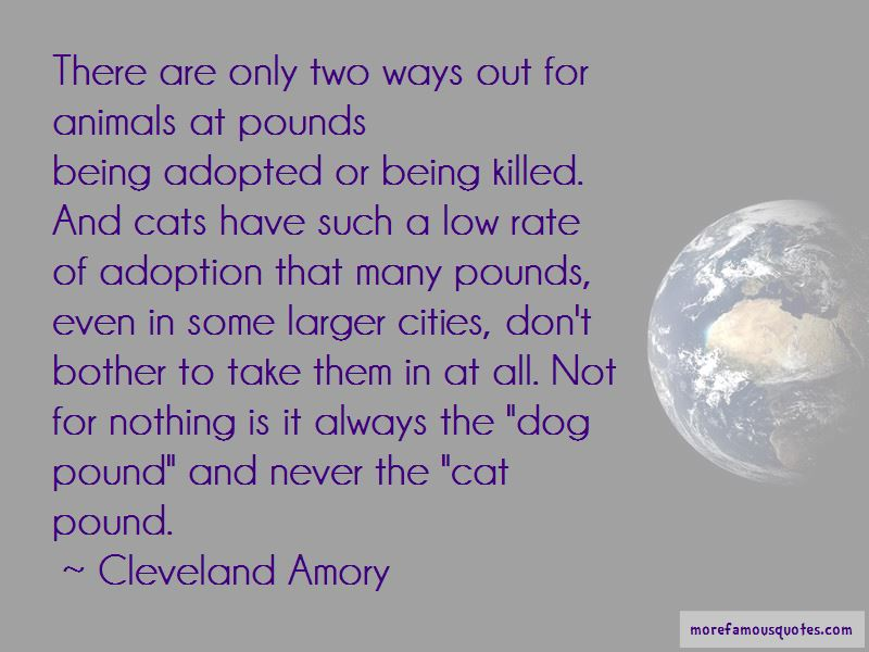 Quotes About Dog Adoption