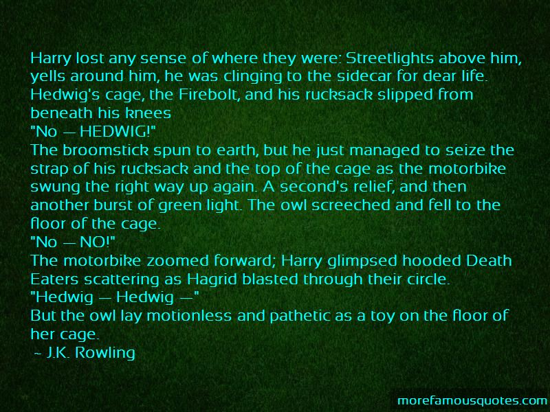 Hedwig Owl Quotes