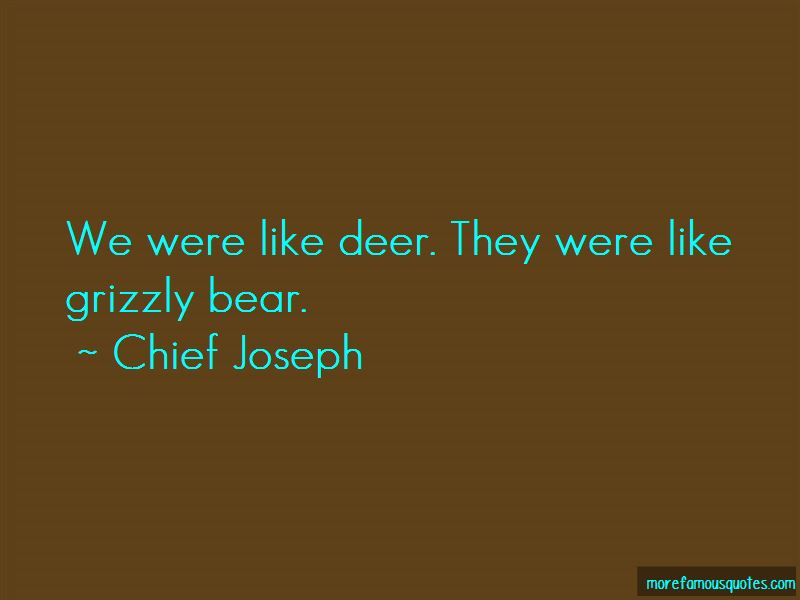 Grizzly Bear Quotes Pictures 2