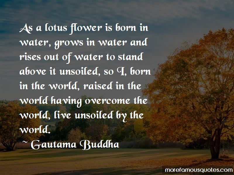 Quotes about a lotus flower top 38 a lotus flower quotes from a lotus flower quotes pictures 3 mightylinksfo Choice Image