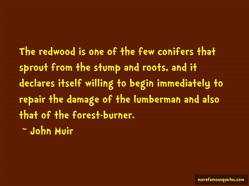 Conifers Quotes Pictures 3
