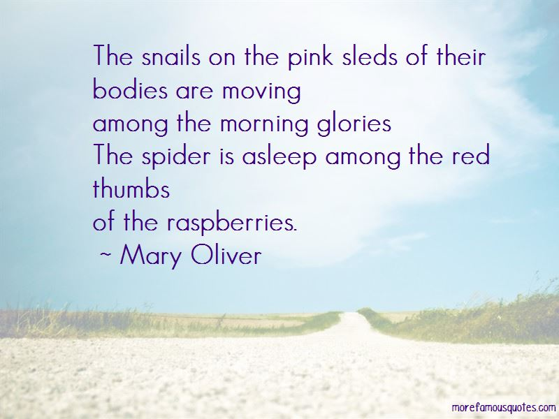 Quotes About Morning Glories