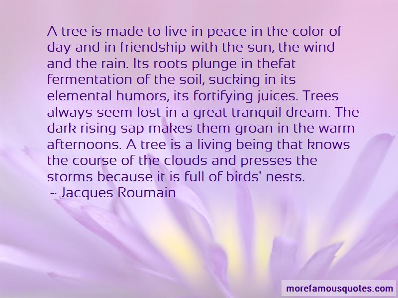 Quotes About Birds And Friendship