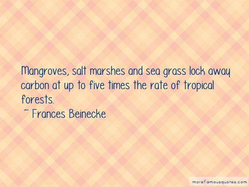 Quotes About Salt Marshes