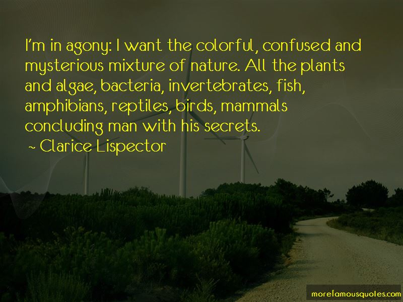Quotes About Nature Birds