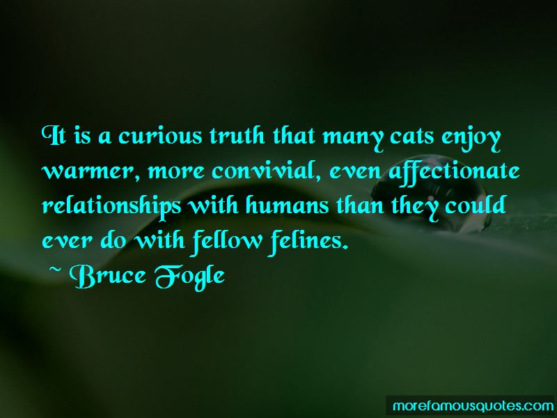 Cats And Humans Quotes Pictures 4