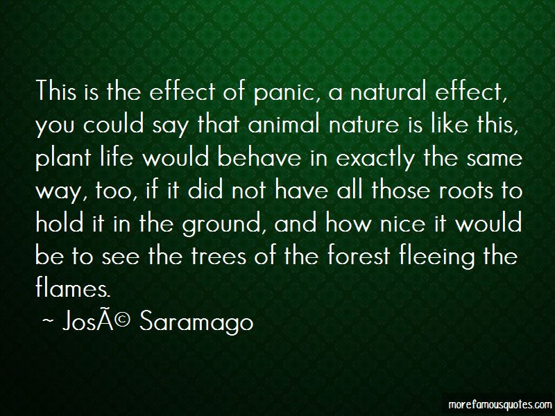Forest And Nature Quotes Pictures 3