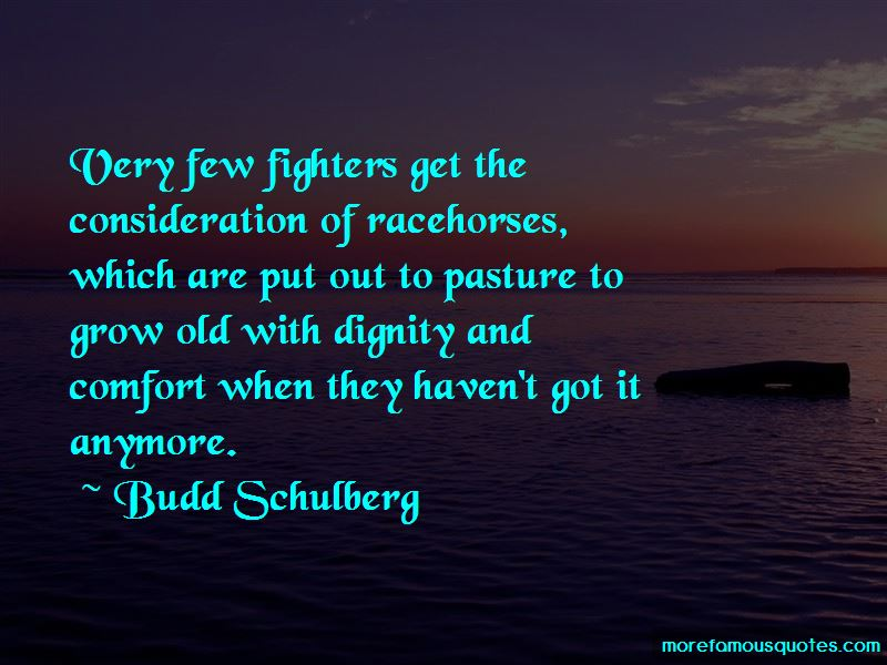 Racehorses Quotes Pictures 2