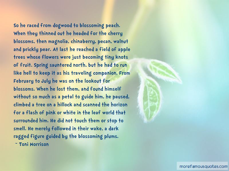 Quotes About Magnolia Blossoms