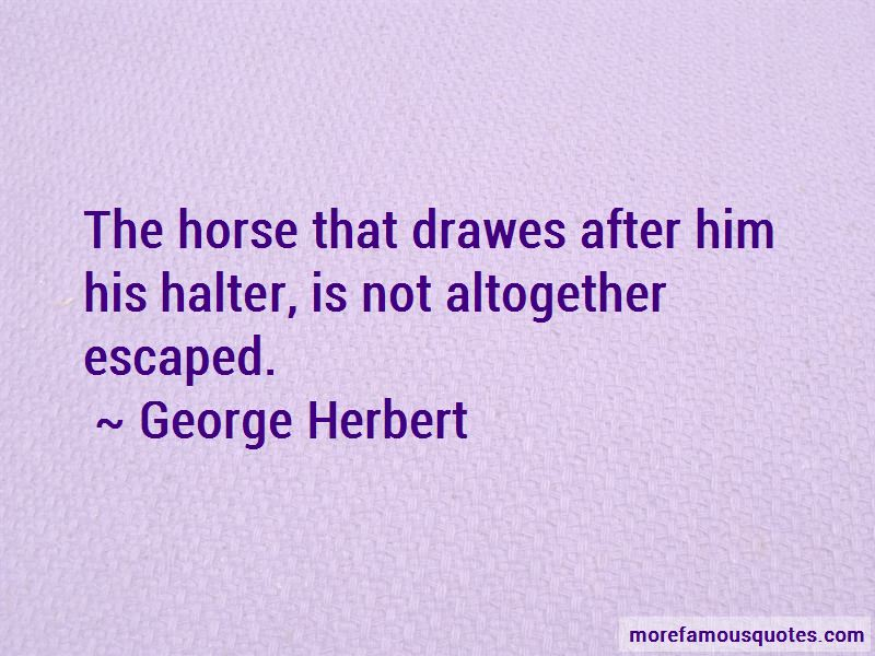 Halter Horse Quotes Pictures 2
