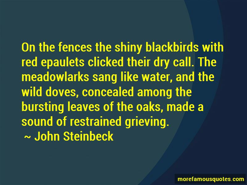 Meadowlarks Quotes Pictures 2