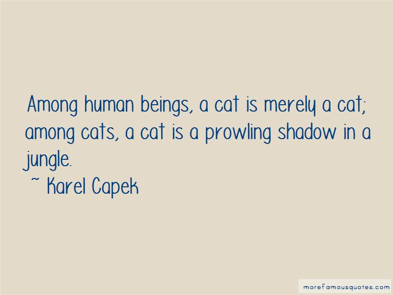 Quotes About Jungle Cats
