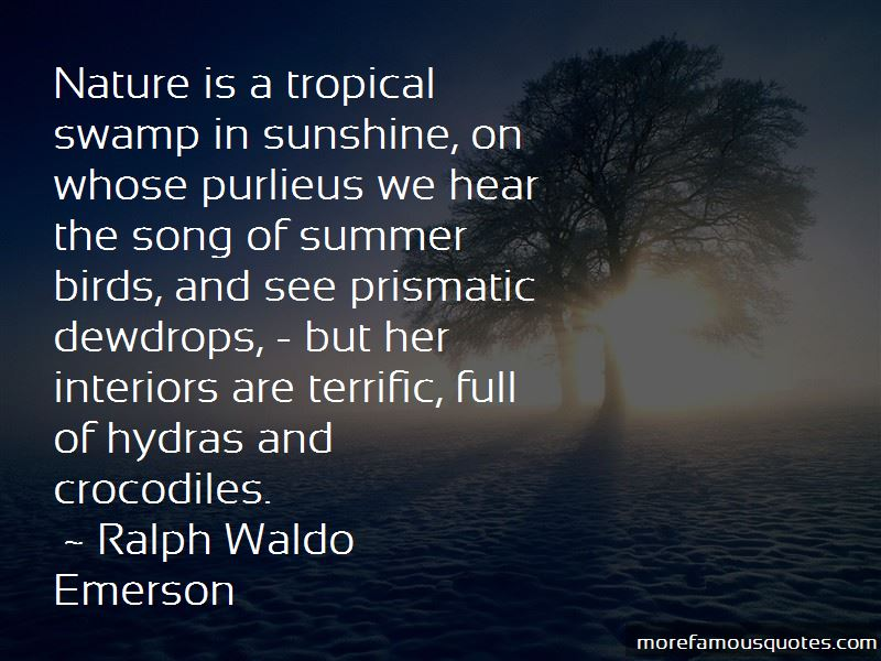 Tropical Summer Quotes Pictures 4