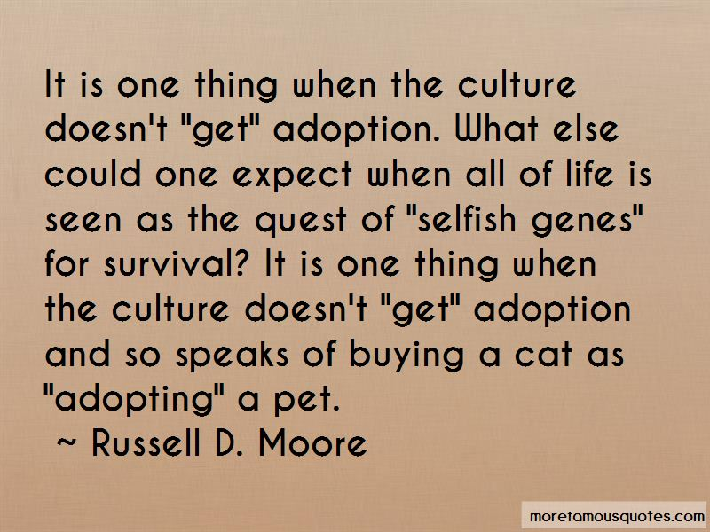 Adopting Cat Quotes