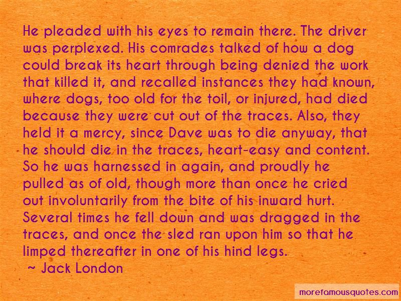Sled Dog Quotes Pictures 3