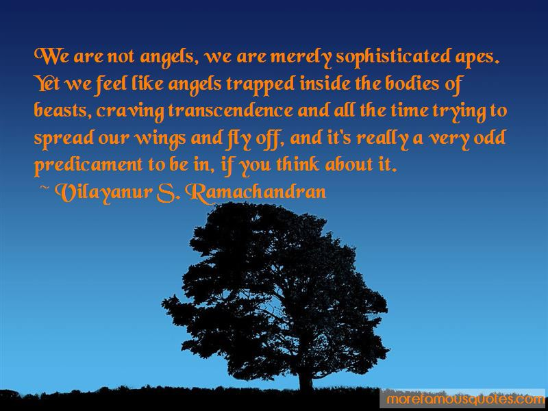 We Are Not Angels Quotes Pictures 3