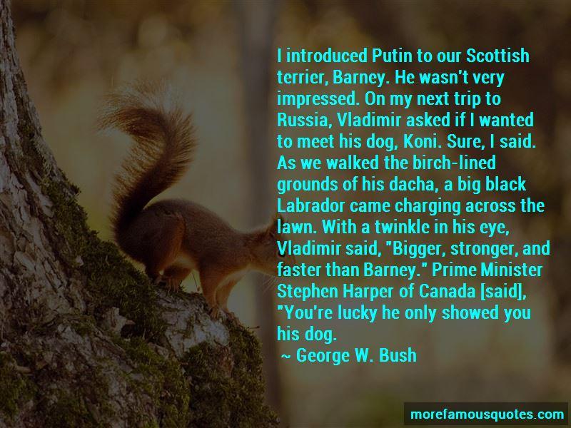 Black Labrador Quotes