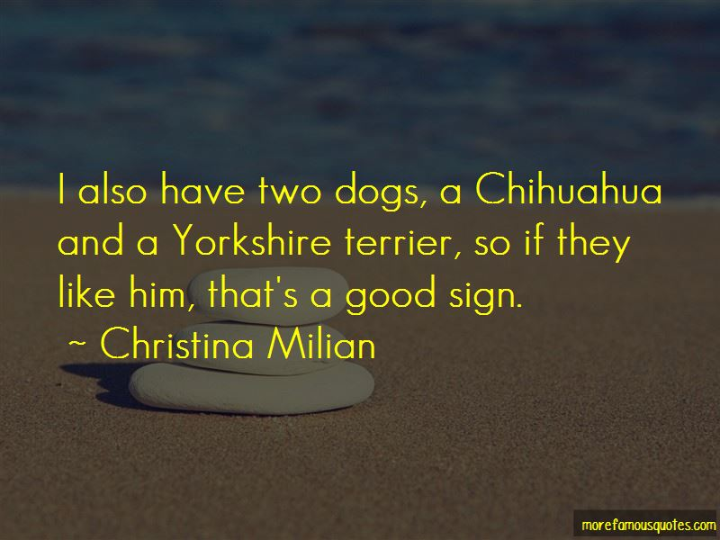 Yorkshire Terrier Quotes Pictures 2