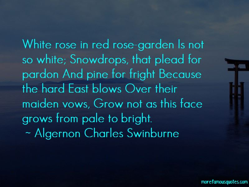 White And Red Rose Quotes Pictures 2