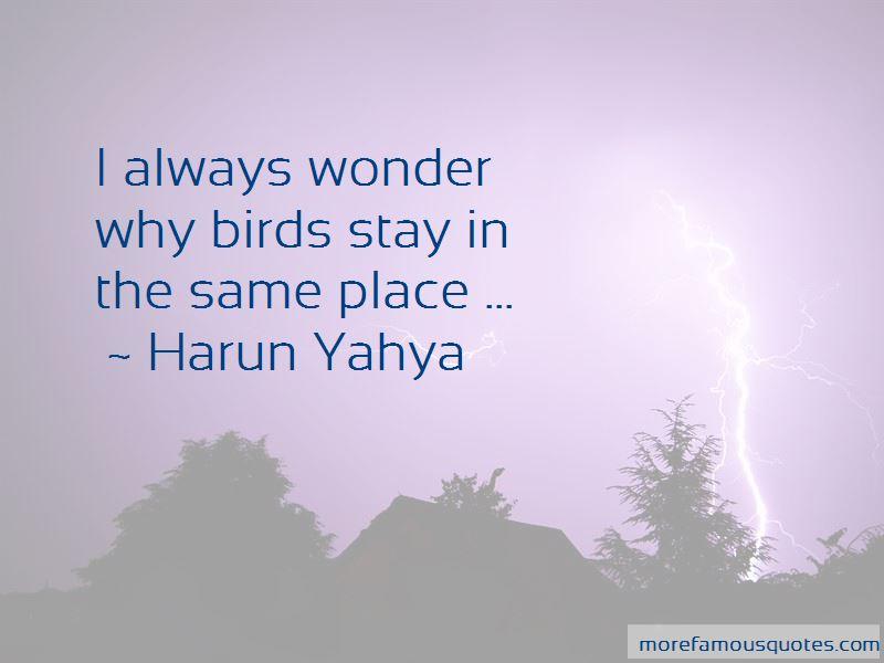 I Always Wonder Why Birds Quotes