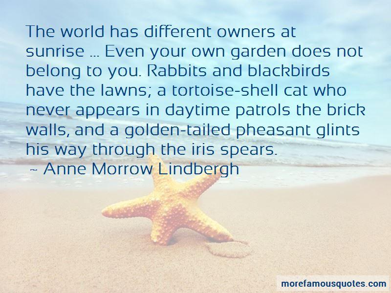 Tortoise Quotes Pictures 3