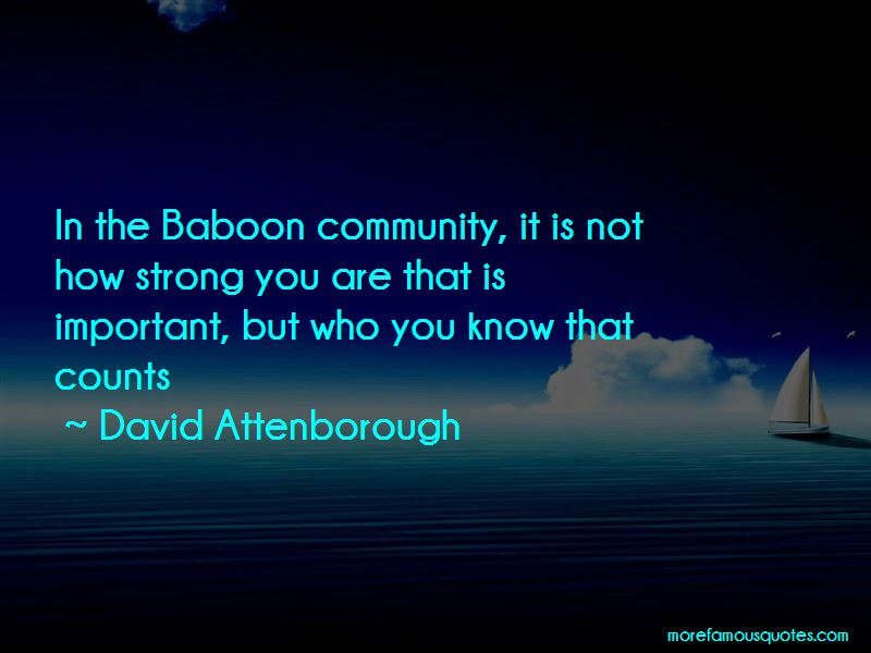 Ir Baboon Quotes