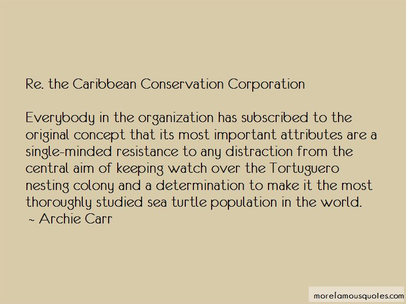 Sea Turtle Conservation Quotes