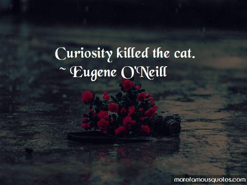 Curiosity Killed Cat Quotes Pictures 3