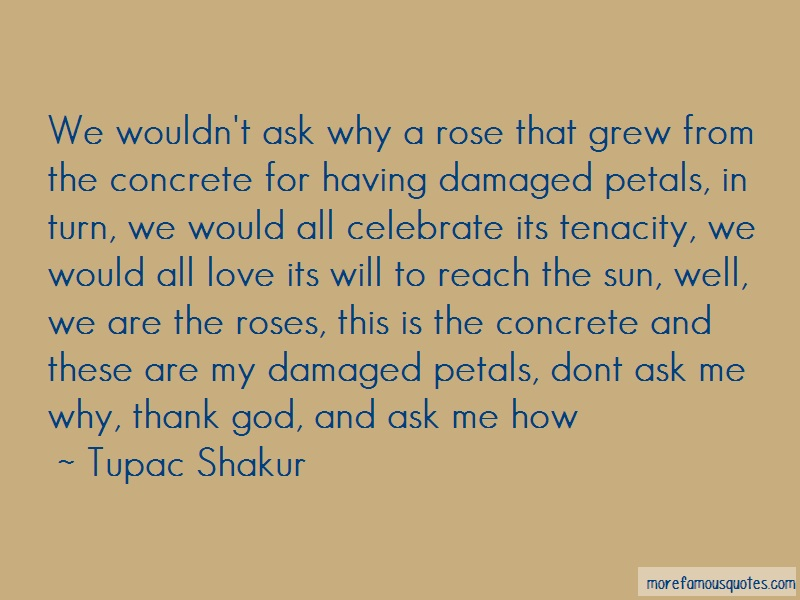 Tupac Shakur Quotes: We Wouldnt Ask Why A Rose That Grew From