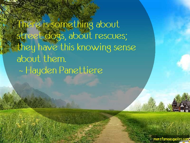 Hayden Panettiere Quotes: There Is Something About Street Dogs