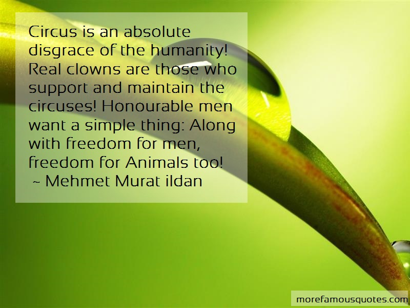 Mehmet Murat Ildan Quotes: Circus is an absolute disgrace of the